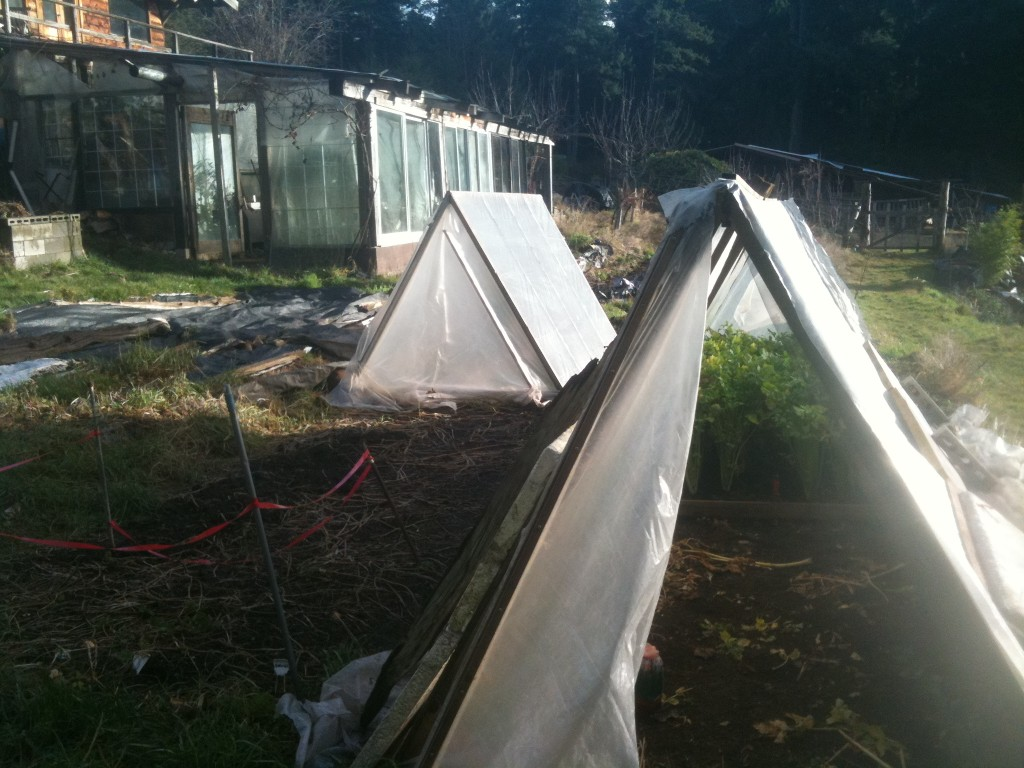 coldframe greenhouses