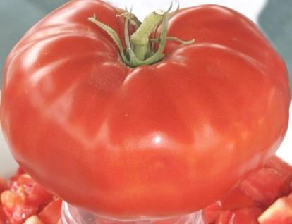 giant beefsteak tomato