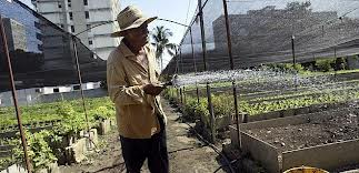 cuban_urban_greenhouse_agriculture